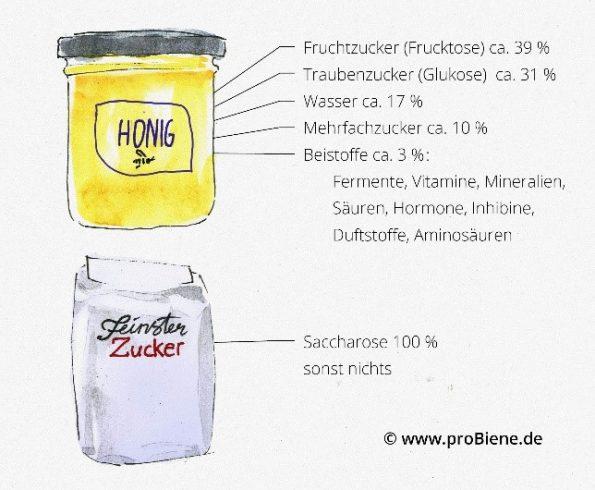Inhaltsstoffe von Honig und Zucker im Vergleich