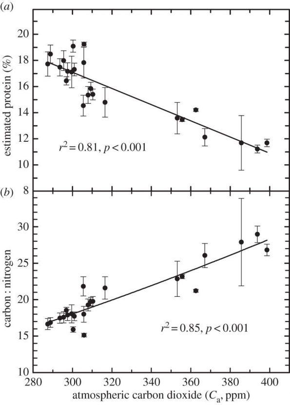 Abbildung 1: Berechneter Proteingehalt der Pollen und das Verhältnis Kohlenstoff : Stickstoff in Abhängigkeit zur CO2-Konzentration in der Atmosphäre.