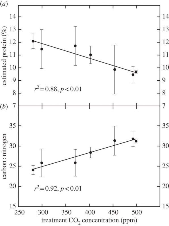 Abbildung 2: Berechneter Proteingehalt der Pollen und das Verhältnis Kohlenstoff : Stickstoff   in Abhängigkeit zur CO2-Konzentration im Labor.